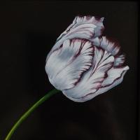 Tulip, oil paint on board, 20 x 30 cm, 2020
