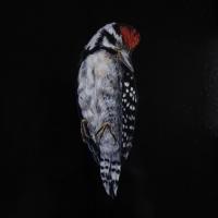 Lesser spotted woodpecker, Oil paint on board, 20 x 30, 2020
