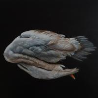 Swan, oil paint on board, 40 x 50 cm, 2020